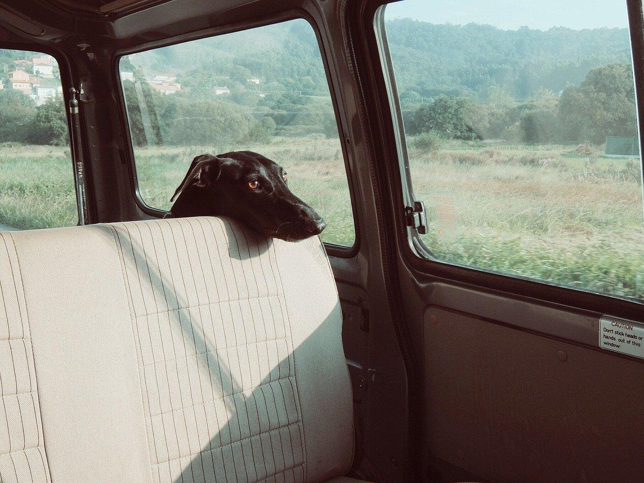 Trasportare animali domestici in auto